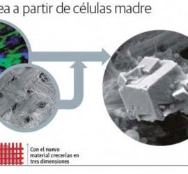 esquema sobre la regeneracion osea a partir de celulas madre para la creación de huesos artificiales