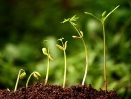 Una fotografía de pequeños brotes de plantas creciendo y fomentando la agricultura