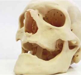 Un modelo de una calavera realizado con impresión 3D para la salud
